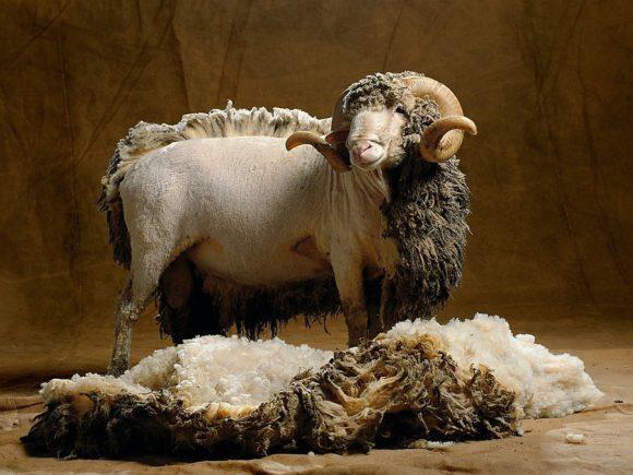 Обзор ковриков для йоги из овечьей шерсти