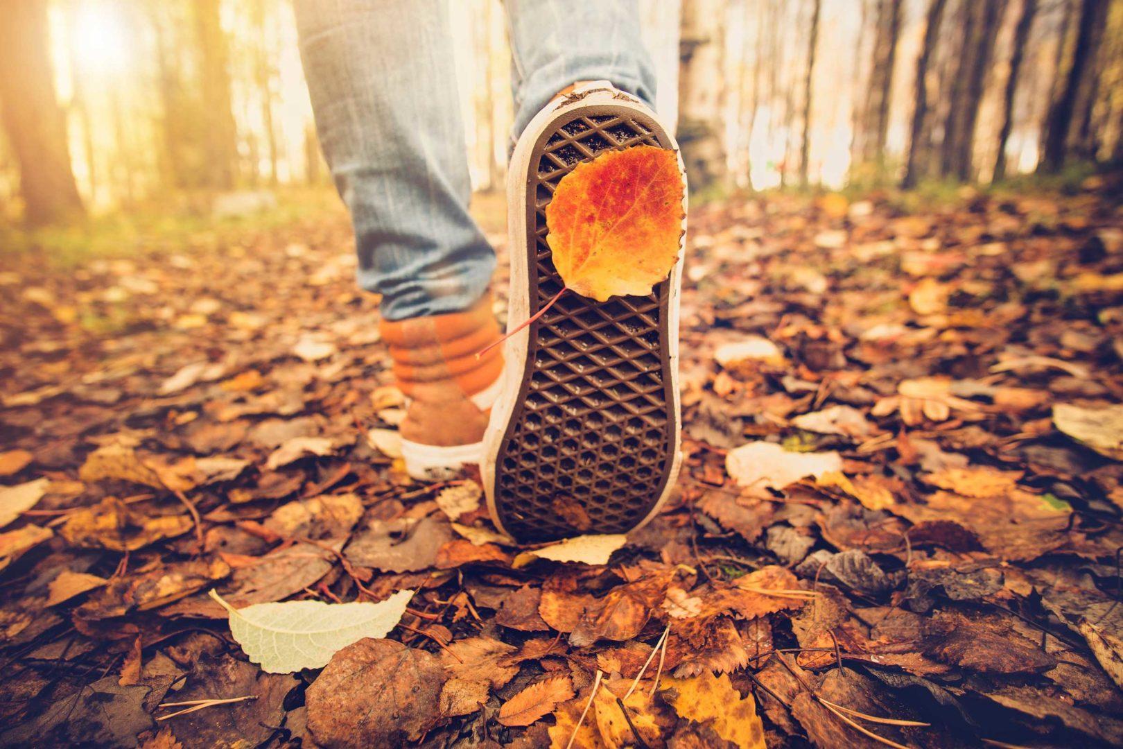 walk_away_autumn