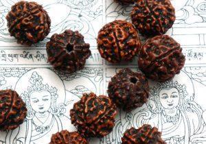 Бусинки из сушеных плодов дерева Рудракши 5 лиц