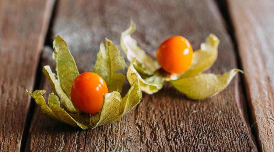 фото: ашваганда ягоды